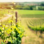 sector_vitivinicola